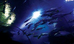 تعرف في المقال على افضل الانشطة السياحية في عالم تحت الماء لنكاوي ، بالإضافة الى افضل فنادق لنكاوي القريبة منه