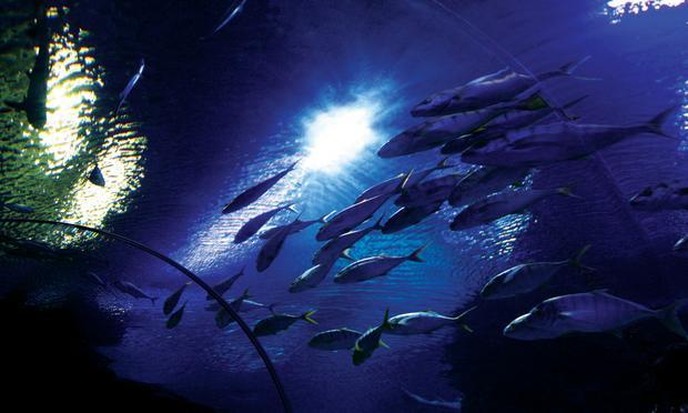 عالم ما تحت الماء لنكاوي