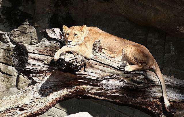 حديقة حيوانات هاجينبك من افضل اماكن السياحة في هامبورغ المانيا