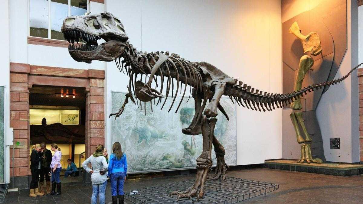 متحف التاريخ الطبيعي فرانكفورت المانيا