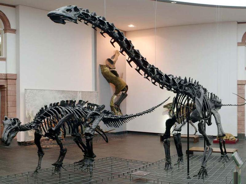 نتيجة بحث الصور عن المتحف الطبيعى فى فرانكفورت