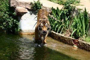 تعد حديقة الحيوانات في برشلونة من اشهر اماكن السياحة في برشلونة اسبانيا