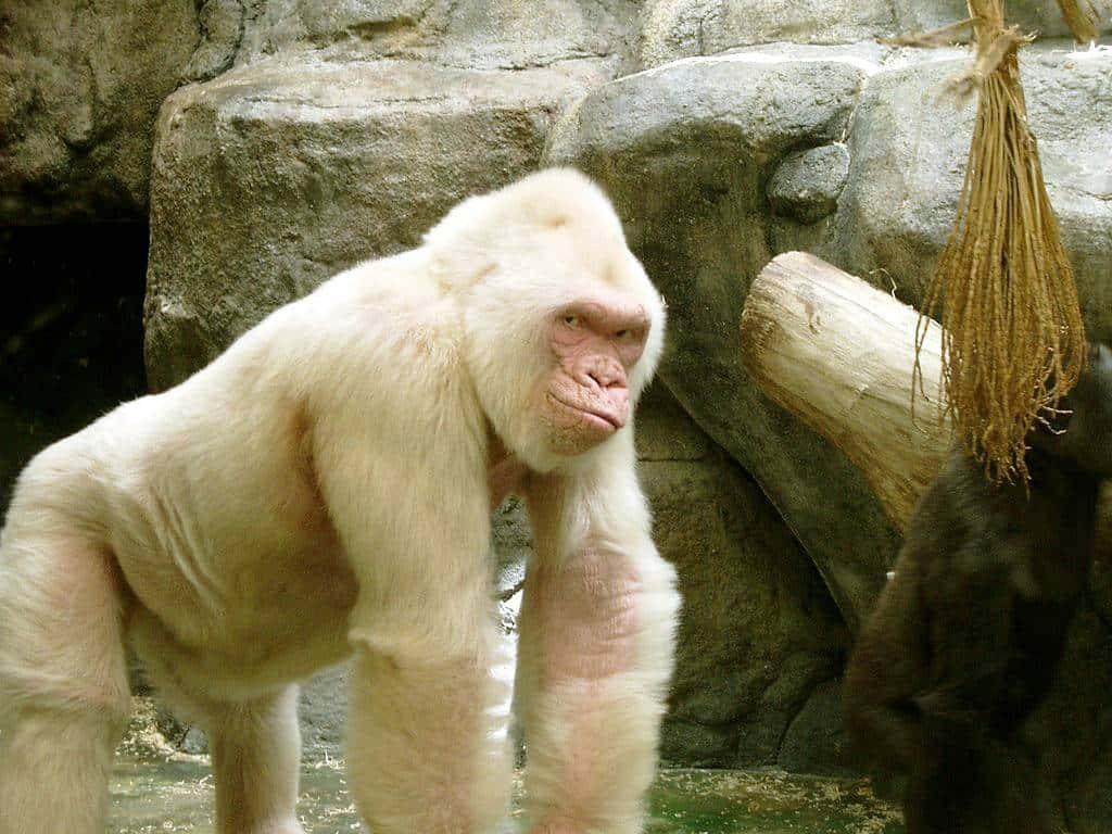 حديقة الحيوانات في برشلونة اسبانيا