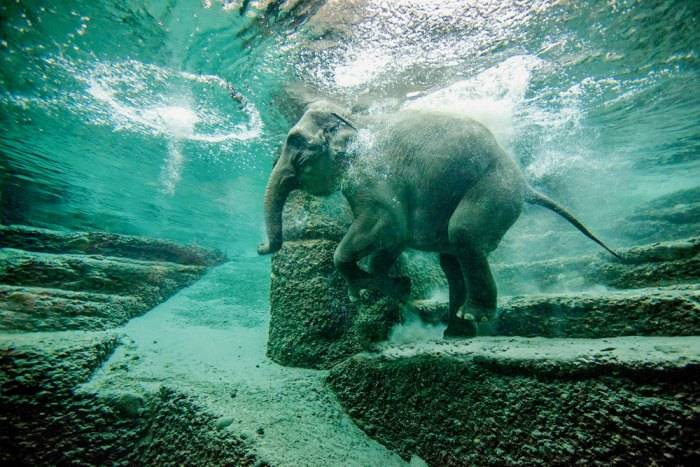 حديقة الحيوانات هيلابرون من الاماكن السياحية في ميونخ المانيا