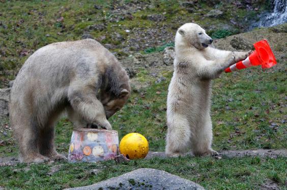 حديقة الحيوانات هيلابرون ميونخ المانيا