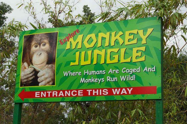 غابة القرود في ميامي