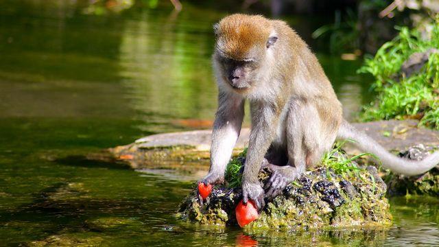 غابة القرود في مدينة ميامي الامريكية
