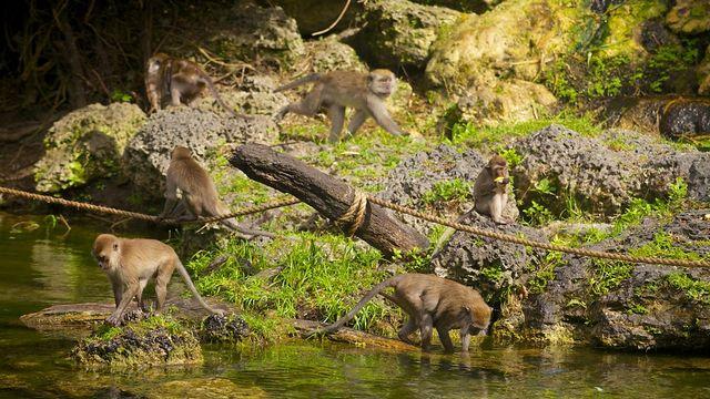 غابة القرود من اجمل اماكن السياحة في ميامي امريكا