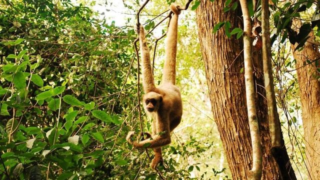 غابة القرود من افضل الاماكن السياحية في ميامي