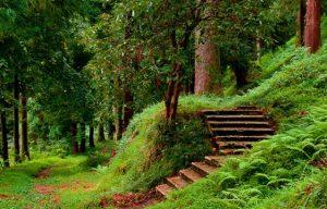 الحديقة النباتية في باتومي من اشهر الاماكن السياحية في باتومي جورجيا