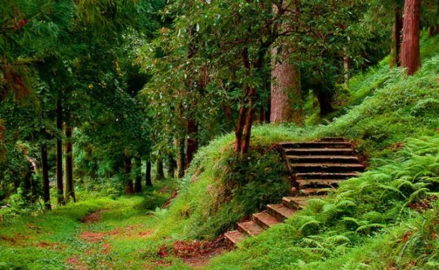 الحديقة النباتية في باتومي من اهم المناطق السياحية في باتومي جورجيا