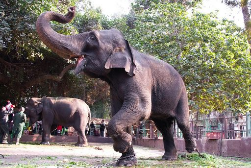 حديقة حيوانات الجيزة تعتبر واحدة من اجمل حدائق القاهرة مصر
