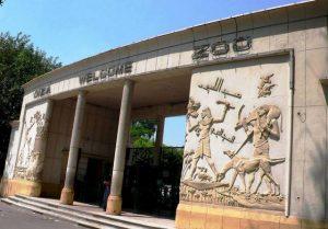 تعرف في المقال على افضل الانشطة السياحية في حديقة حيوان الجيزة ، بالإضافة الى افضل فنادق القاهرة القريبة منها