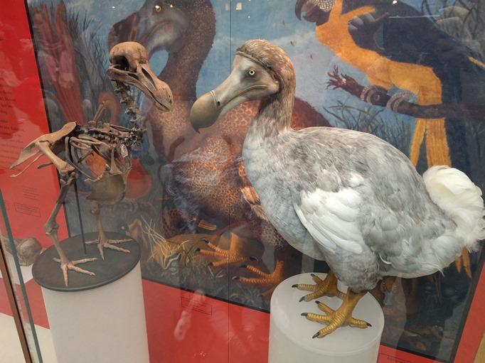 متحف أكسفورد للتاريخ الطبيعي