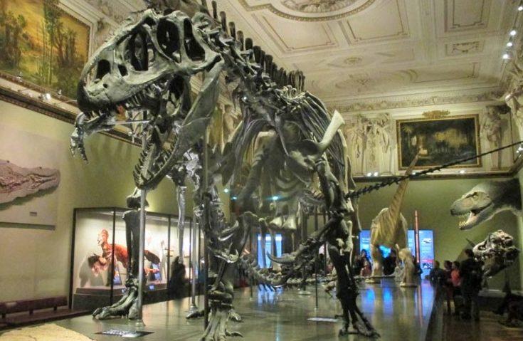 متحف التاريخ الطبيعي في مدينة فيينا النمساوية