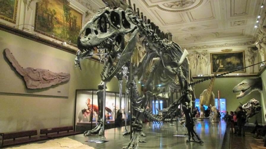 متحف التاريخ الطبيعي،فيينا