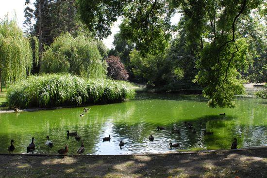 حديقة ستاد من اجمل حدائق فيينا النمسا