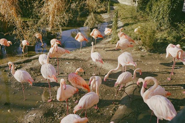 حديقة الحيوانات في سالزبورغ