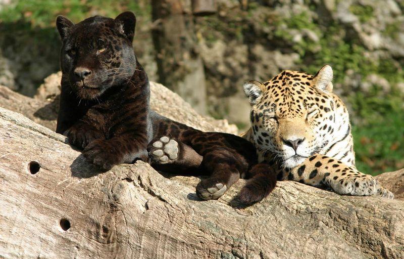 حديقة حيوانات سالزبورغ احدى المناطق السياحية في سالزبورغ النمسا
