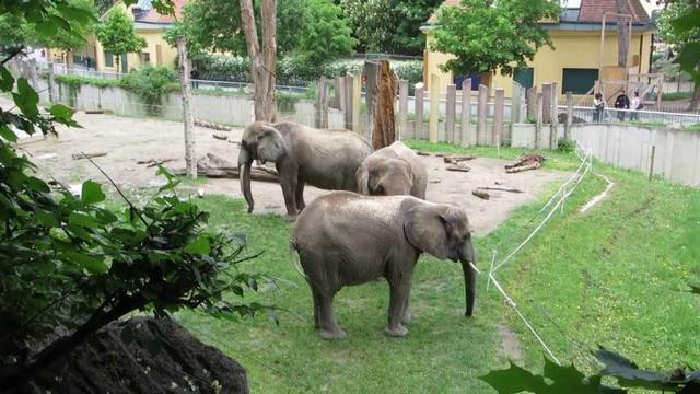 حديقة حيوانات فيينا