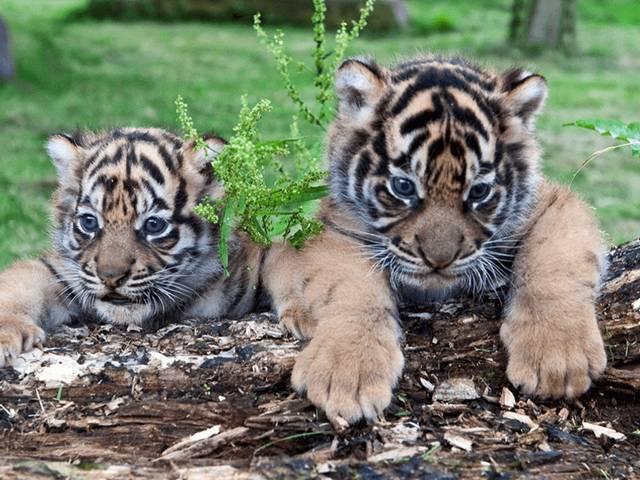 حديقة حيوانات تبليسي