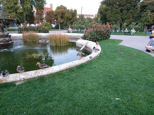 حديقة الزهور في فيينا