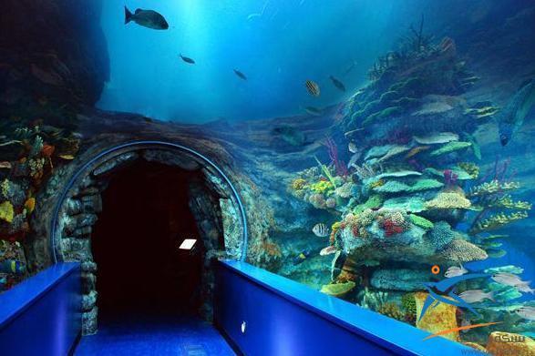 متحف الاحياء المائية يعد واحداً من اجمل اماكن السياحة في الاسكندرية مصر