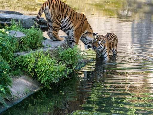 حديقة حيوانات كولون من اهم اماكن السياحة في كولون