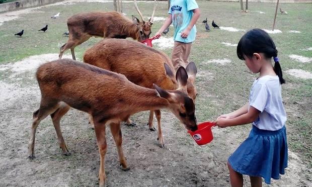 حديقة الحياة البرية لنكاوي من اجمل اماكن سياحية في لنكاوي