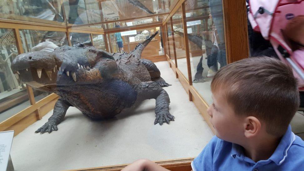 متحف أكسفورد للتاريخ الطبيعي من افضل اماكن السياحة في اكسفورد انجلترا