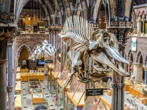 متحف اكسفورد للتاريخ الطبيعي يعد من افضل الاماكن السياحية في انجلترا اكسفورد