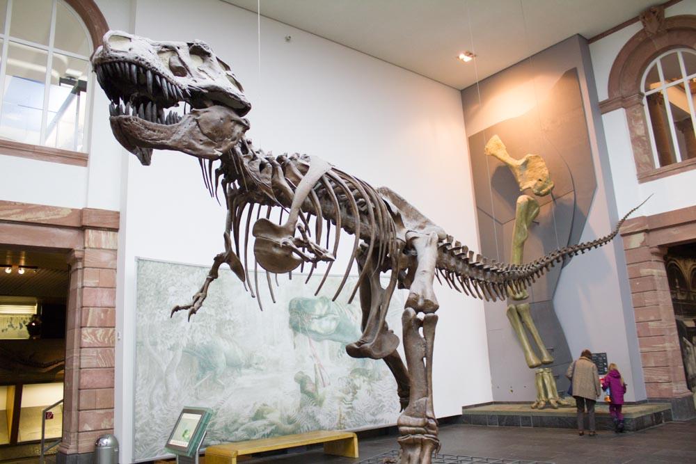 متحف التاريخ الطبيعي من اهم متاحف فرانكفورت المانيا
