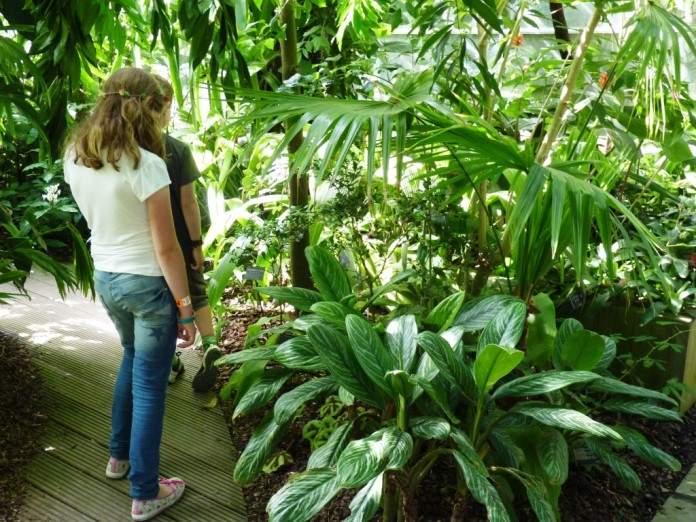 حديقة جامعة اكسفورد النباتية