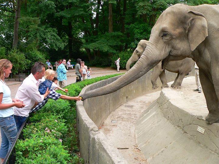 حديقة حيوانات هاجينبك من اروع حدائق مدينة هامبورغ وهي من الاماكن السياحية في هامبورغ المانيا الهامة