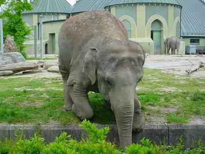 حديقة حيوانات هيلابرون ميونخ ، تعد من افضل الاماكن السياحية في ميونخ