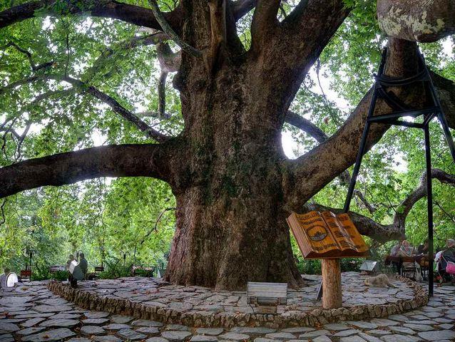 الشجرة التاريخية في بورصة من اهم معالم بورصة تركيا السياحية
