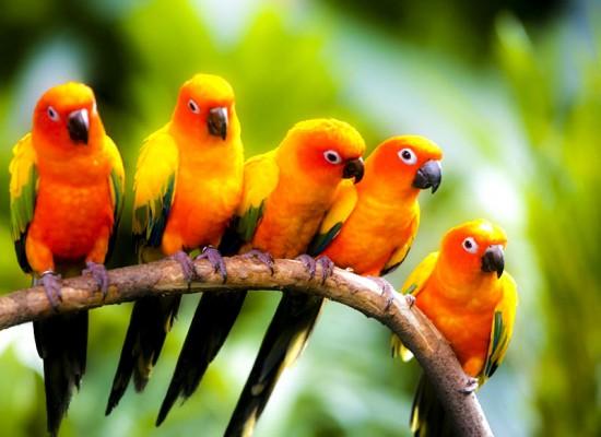 حديقة الطيور في كوالالمبور من افضل المناطق السياحية في كوالالمبور