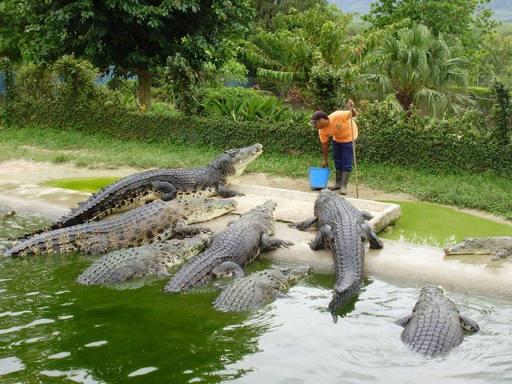 حديقة التماسيح من افضل اماكن السياحة في لنكاوي