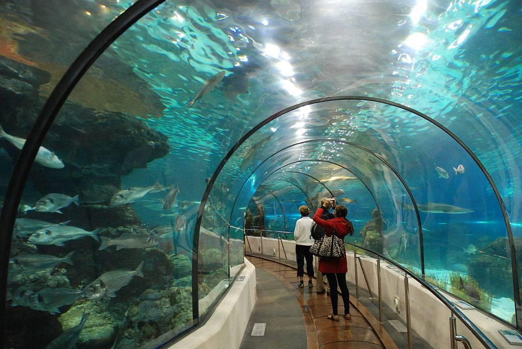 عالم تحت الماء من اجمل اماكن الترفيه في جزيرة لنكاوي