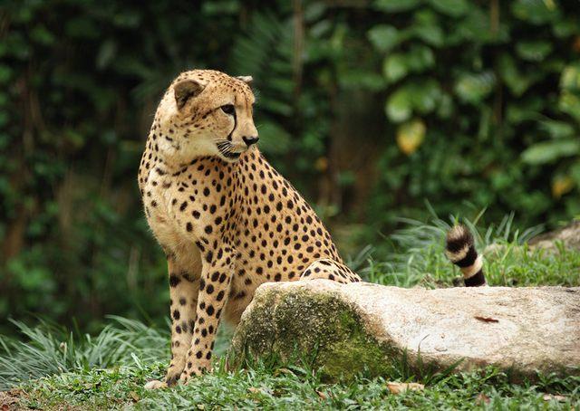 حديقة حيوانات سنغافورة