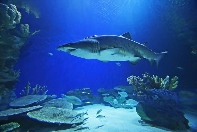 اكواريوم دبي من اجمل الاماكن السياحية في دبي الامارات - حوض الاسماك في دبي