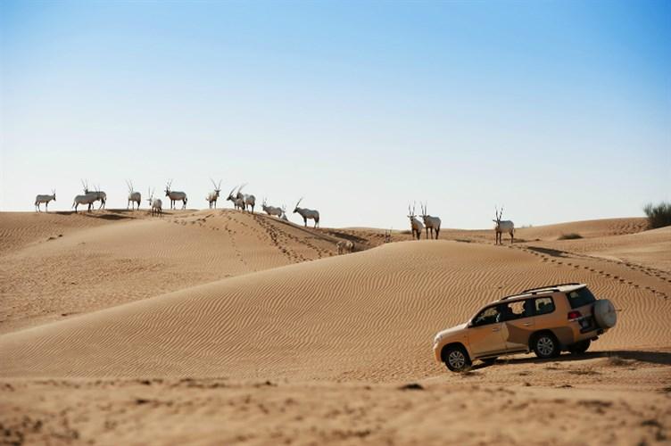 محمية دبي الصحراوية من افضل الاماكن السياحية في دبي - اماكن يجب زيارتها في دبي