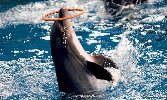 دبي دولفيناريوم اهم اماكن السياحة في دبي Dubai-Dolphinarium-1.jpg