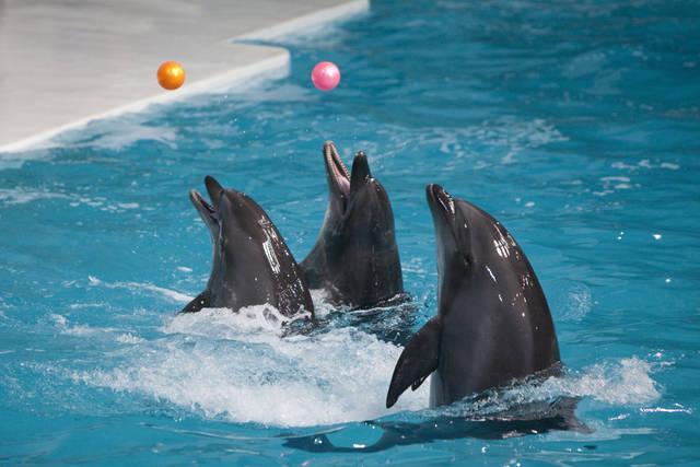 يعد دبي دولفيناريوم من اجمل اماكن سياحة دبي ، اذ تقدم اجمل عروض الدلافين في دبي
