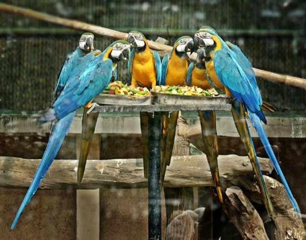 حديقة حيوان في دلهي