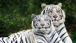 حديقة حيوان دلهي من افضل اماكن السياحة في نيودلهي الهند