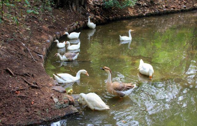 حديقة حيوان دلهي