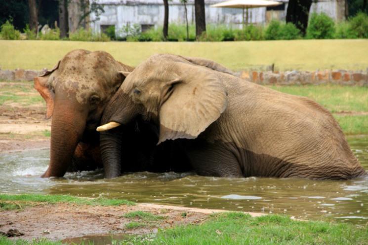 حديقة حيوان دلهي من اهم الاماكن السياحية في دلهي