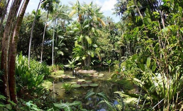 حديقة سنغافورة النباتية من اجمل اماكن السياحة في سنغافورة