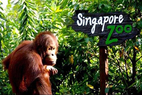 حديقة حيوانات سنغافورة من افضل اماكن السياحة في سنغافورة